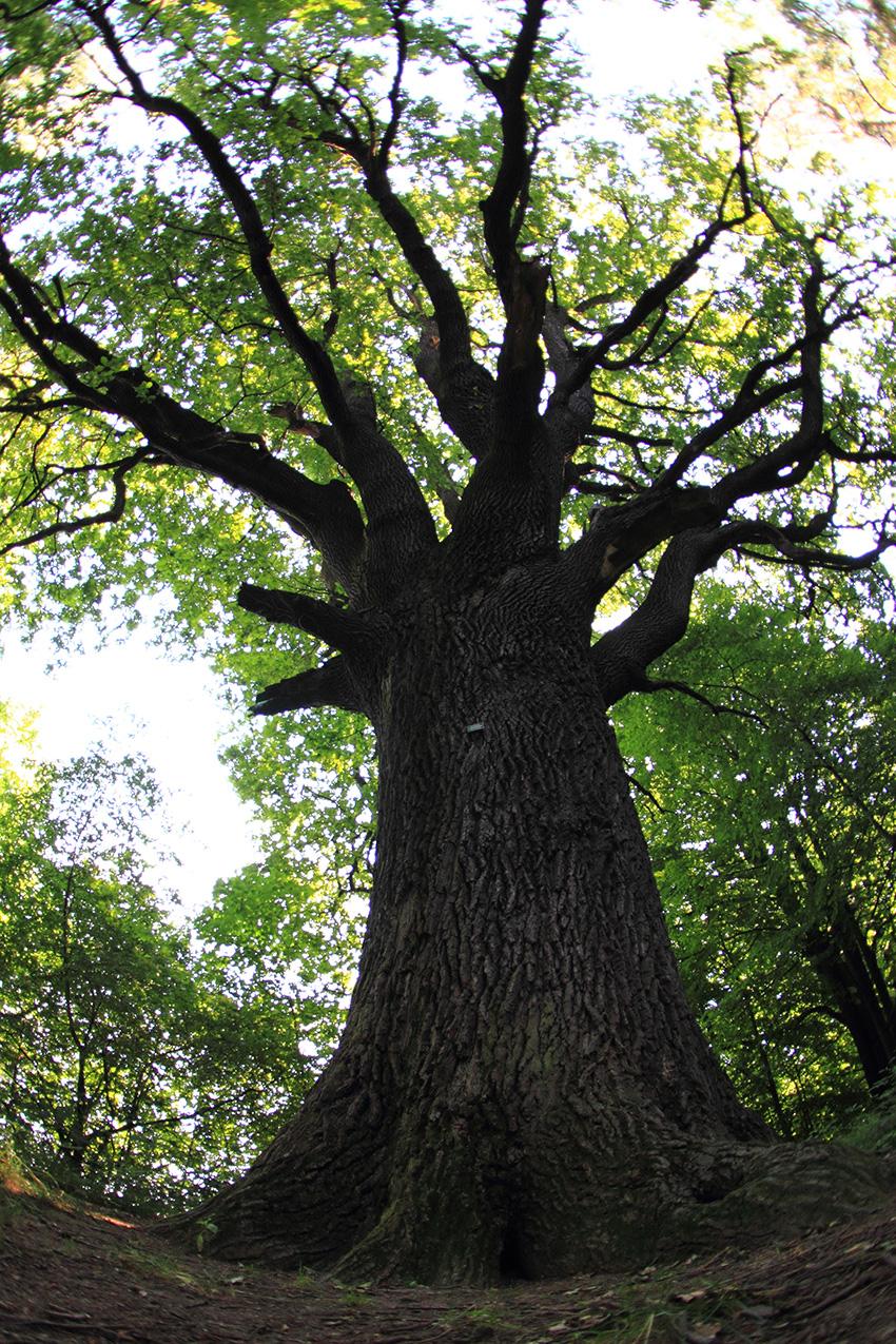Rich Tree Service mature tree