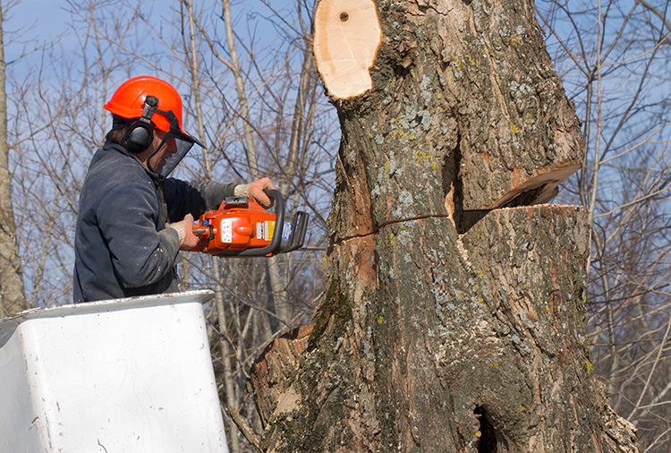 Rich Tree Service employee at work