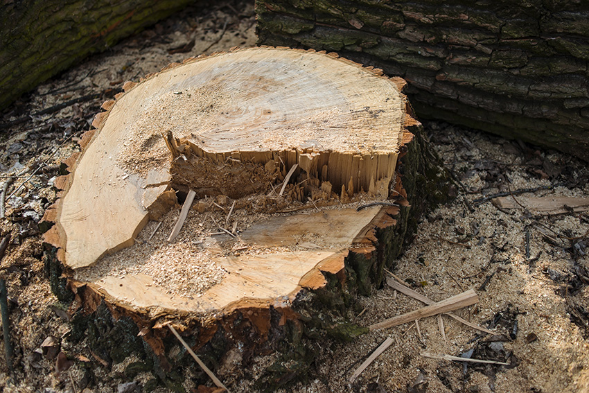 Stump grinding with Rich Tree Service