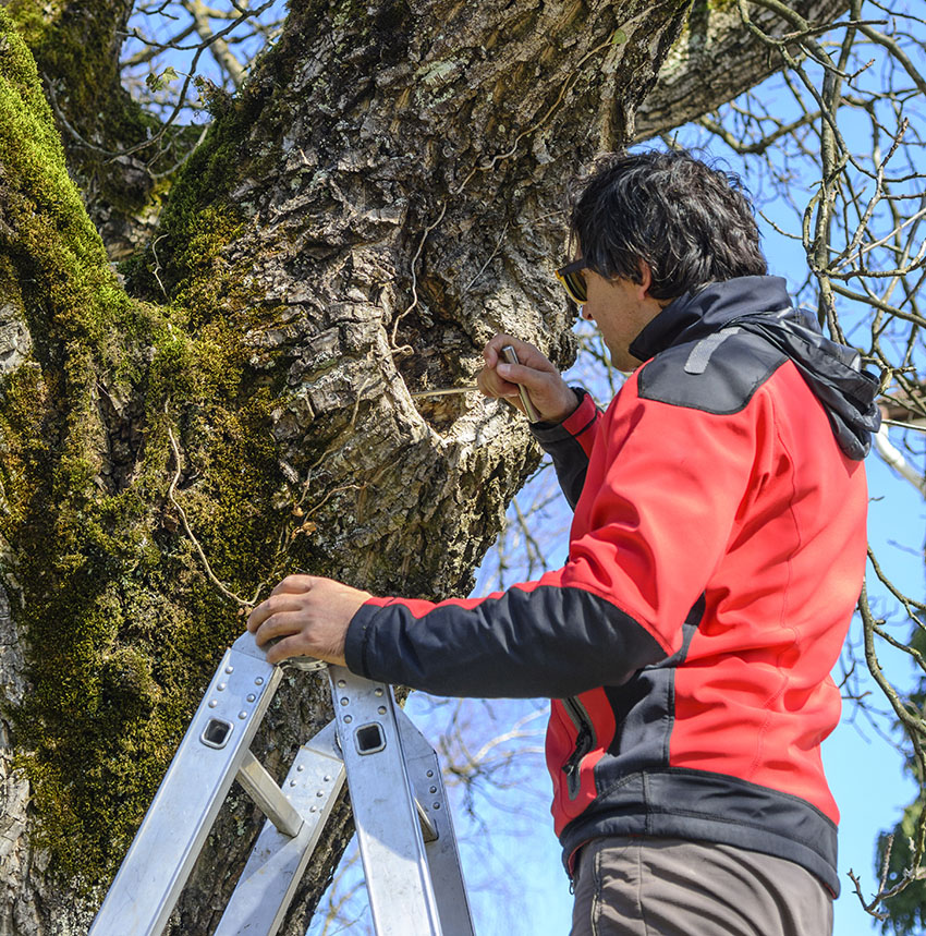 Spring tree inspection with richtreeservice.com